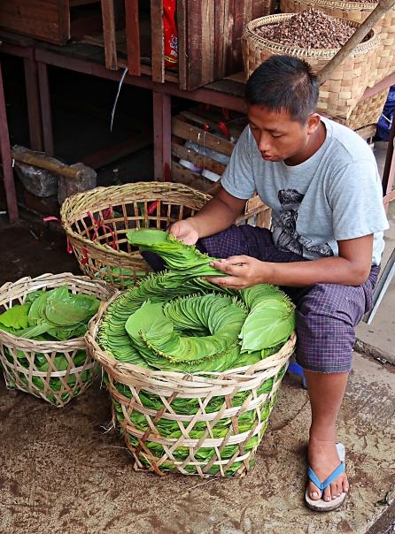 Zay Cho Betel Leaves